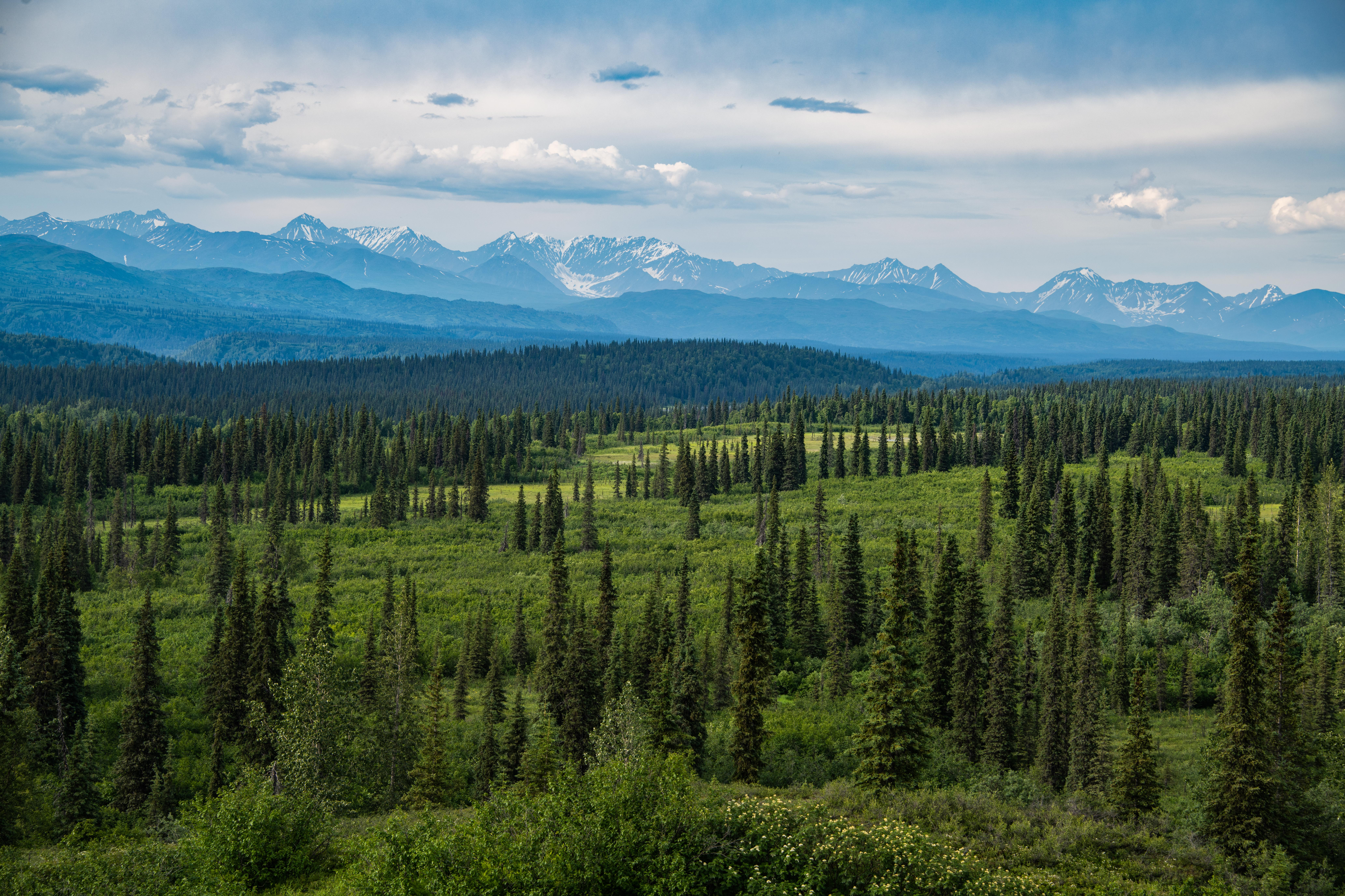Viewpoint on the way of roadtrip to Denali Natiaonal Park by Travel Anubhav